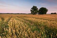 Felder des Getreides Lizenzfreie Stockbilder