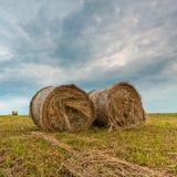 Felder des Getreides Stockbild