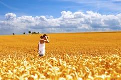 Felder des Goldes lizenzfreies stockbild