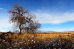 Felder des Goldes Stockbild