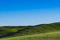 Felder des grünen Weizens in Ost-Staat Washington Lizenzfreies Stockbild