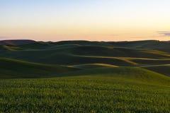 Felder des grünen Weizens in Ost-Staat Washington Lizenzfreies Stockfoto