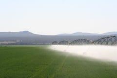 Felder des Grüns Stockfotos