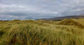 Felder des Grases unter einem bewölkten Himmel in Irland Stockbild