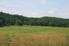 Felder des Grases, Wald von Bäumen Stockfotos