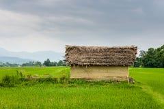 Felder des kleinen Hauses und des Reises in Nepal Stockbild
