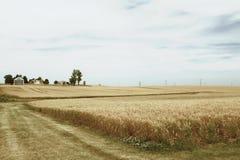 Felder des Kornes Stockfotografie
