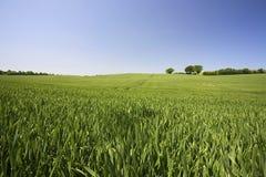 Felder des Sommers Stockbilder