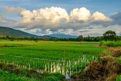 Felder einer großen Wolke und des Reises Lizenzfreies Stockbild