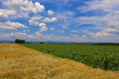 Felder gegen einen blauen Himmel Stockfotografie