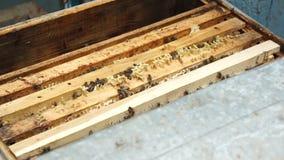 Felder im Bienenstock stock video