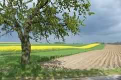 Felder im Frühjahr Lizenzfreie Stockfotos