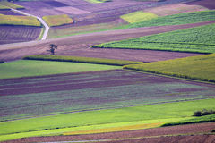 Felder im Herbst lizenzfreies stockfoto