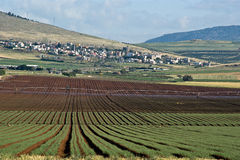 Felder im Yezreel Tal Stockfotografie