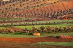 Felder in Marokko Stockbilder