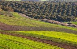 Felder in Marokko Lizenzfreie Stockfotos
