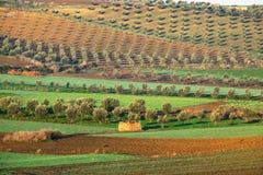 Felder in Marokko Stockfotos
