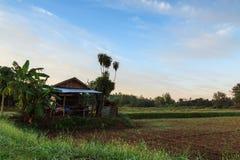 Felder mit blauem Himmel und Wolken Lizenzfreie Stockfotografie