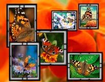 Felder mit Blumen und Basisrecheneinheit Lizenzfreies Stockfoto
