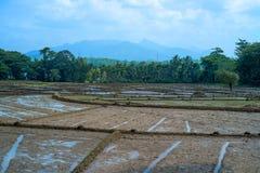 Felder mit Ernten des Reises in Sri Lanka Lizenzfreies Stockbild