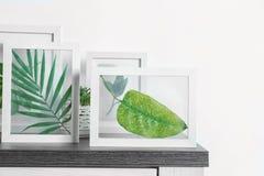 Felder mit grünen Blättern Lizenzfreie Stockfotos