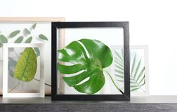 Felder mit grünen Blättern Stockfotografie