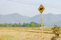 Felder mit Zeichen für Kühe Stockfoto