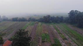 Felder nach Ernte, Rauch von brennenden Unkräutern auf dem Feld Herbstzeit, ländliches Gebiet Vogelperspektive vom Drohne, Fliege stock video footage