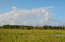 Felder am Nachmittag Stockfotos