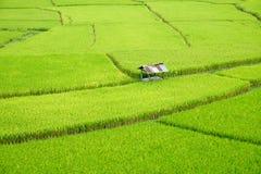 Felder in Nan, Thailand Lizenzfreies Stockfoto
