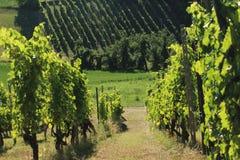 Felder in Nord-Italien Lizenzfreies Stockbild