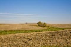 Felder November-Illinois Lizenzfreies Stockbild