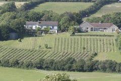 Felder und Häuser in Dorset England Großbritannien Lizenzfreie Stockfotos