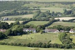 Felder und Häuser in Dorset England Großbritannien Lizenzfreie Stockfotografie