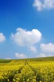 Felder und Himmel Stockfoto