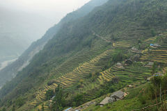 Felder und Holzhäuser in Nepal Lizenzfreie Stockbilder