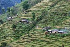 Felder und Holzhäuser in Nepal Stockfoto