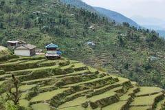 Felder und Holzhäuser in Nepal Stockbild