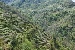 Felder und Holzhäuser in Nepal Lizenzfreie Stockfotografie
