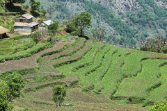 Felder und Holzhäuser in Nepal Lizenzfreies Stockfoto