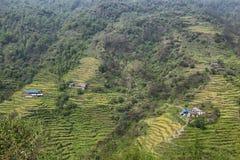 Felder und kleine Holzhäuser in Nepal Stockbilder