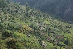 Felder und kleine Holzhäuser in Nepal Stockfotografie