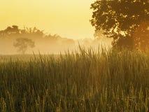 Felder und Sonnenaufgang Stockbild