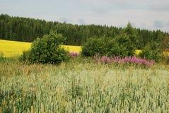 Felder und Wälder der Uusimaa Region in Finnland Stockbilder