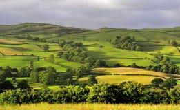 Felder und Wiesen, Cumbria stockbilder