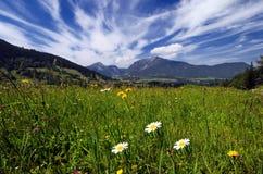 Felder und Wiesen in den Alpen Lizenzfreie Stockfotos