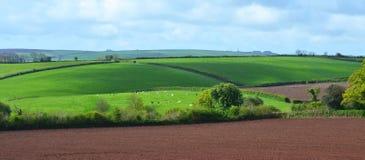 Felder und Wiesen in der britischen Landschaft Stockfotografie