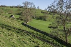 Felder und Wiesen, Höchstbezirk, Großbritannien lizenzfreies stockfoto