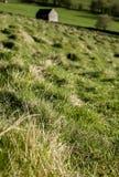 Felder und Wiesen, Höchstbezirk, Großbritannien - sonniger Tag stockbild