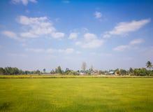 Felder und Wiesen im Sommer Lizenzfreies Stockfoto